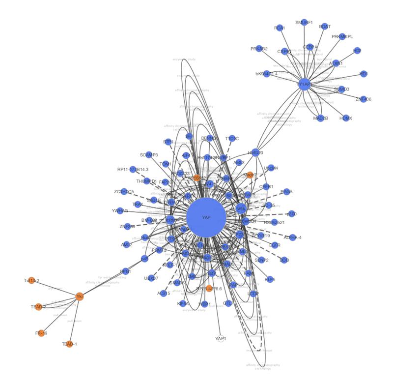 Cytoscape.js screenshot